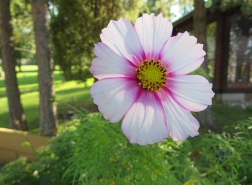Kukka